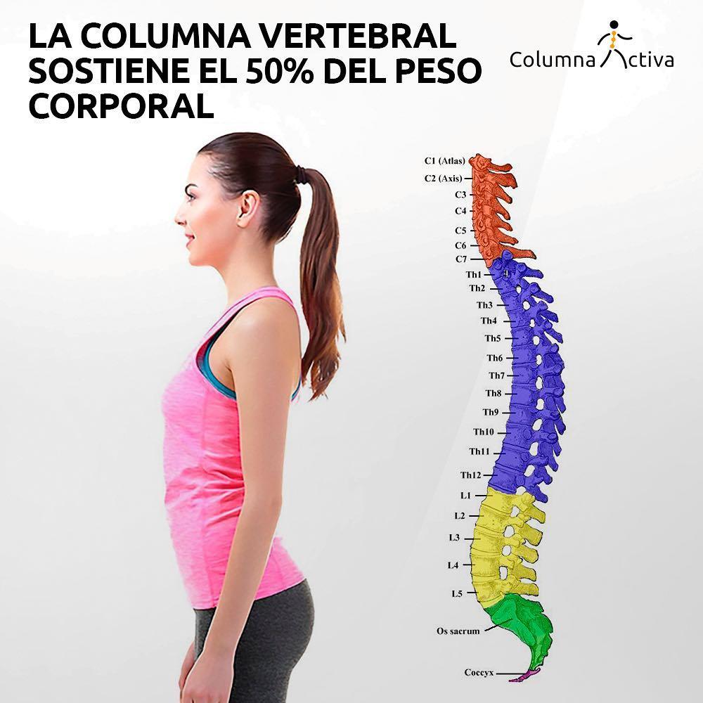 La columna vertebral sostiene el 50% del peso corporal
