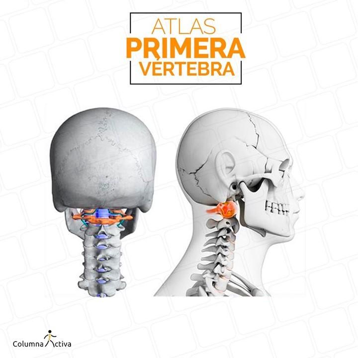 Atlas primera vértebra