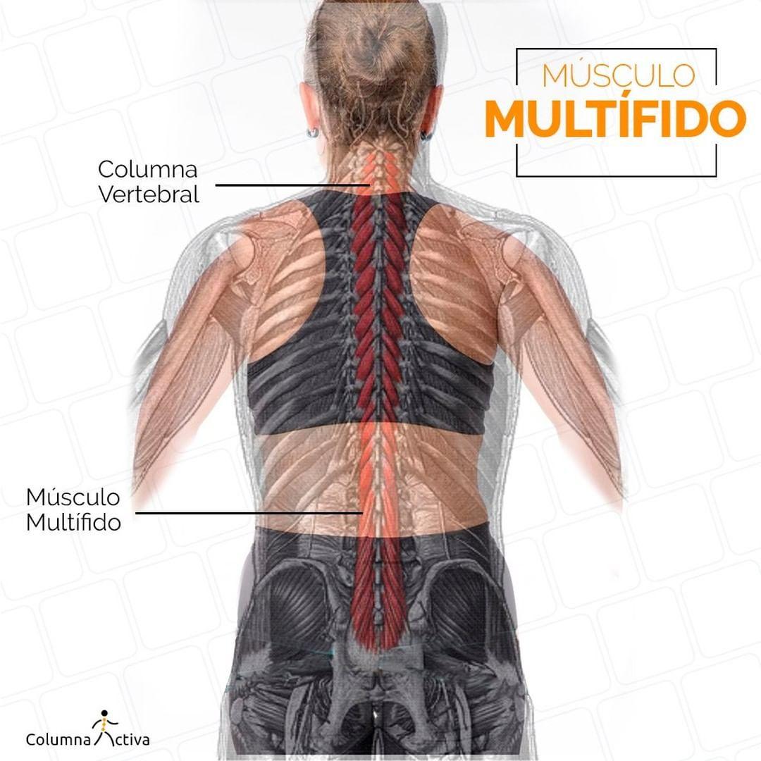 Músculo Multífido